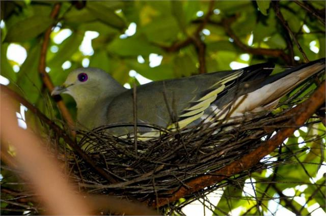 pigeon nest at home good or bad as per vastu