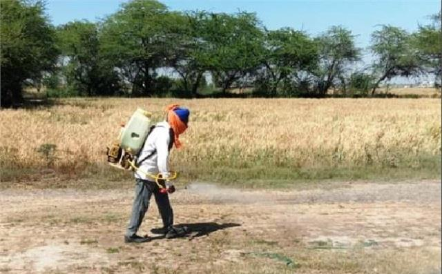 grain mandis will be sanitized before arrival of wheat