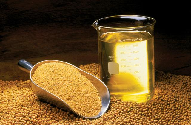 oil oilseed prices fall due to rumors of import duty reduction
