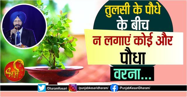 vastu shastra tips about tulsi in hindi