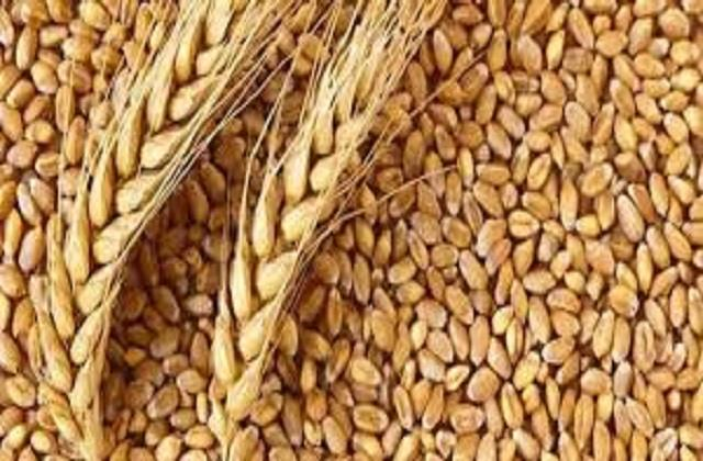 government s claims for wheat procurement on 1 april