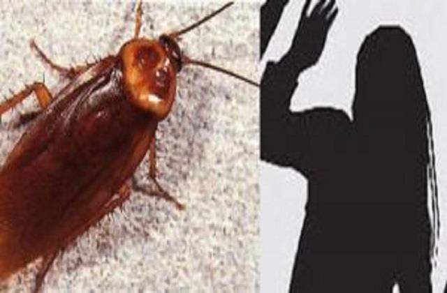 wife afraid of cockroach husband upset and seeks divorce