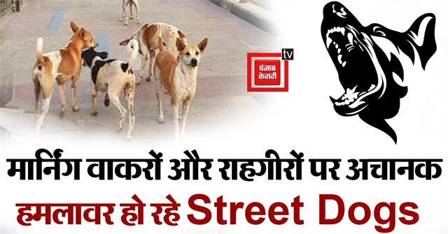 street dogs are suddenly attacking the passers by