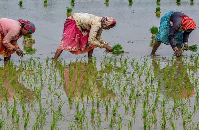 18 49 increase in agricultural exports despite corona crisis