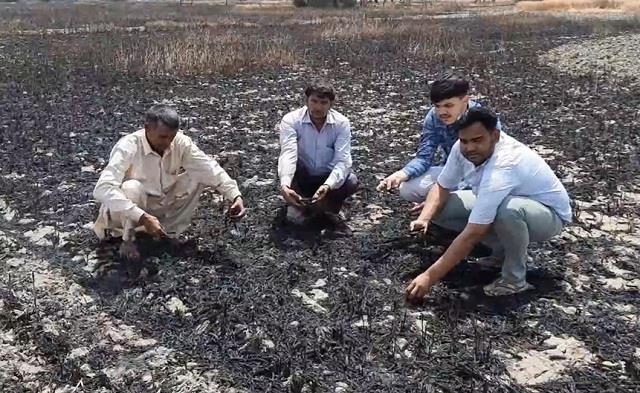 30 acres of wheat crop burnt to ashes by fire
