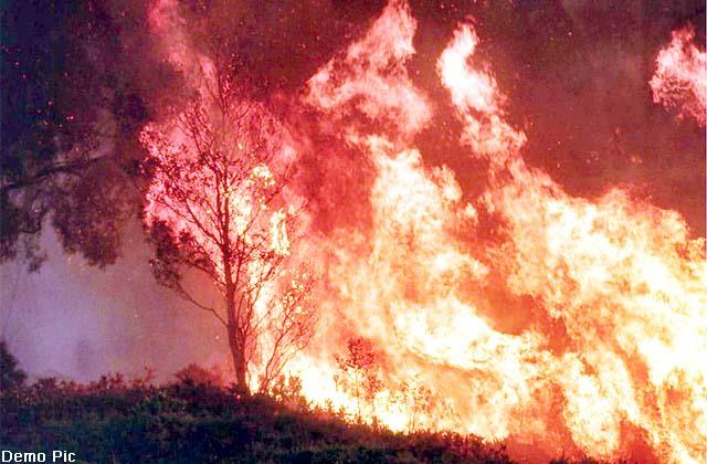 crores of forest wealth and 3 cowshed ashes due to fire