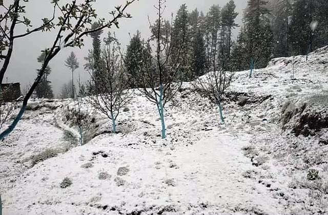 rain and snowfall in shimla