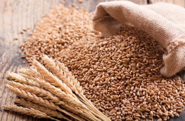 wheat procurement 17 higher than last year