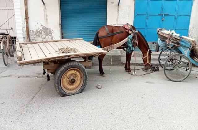 jalandhar horse kill the man