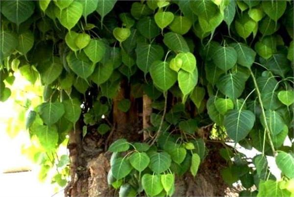 bhartiya praja shakti party resolve to plant a lakh trees