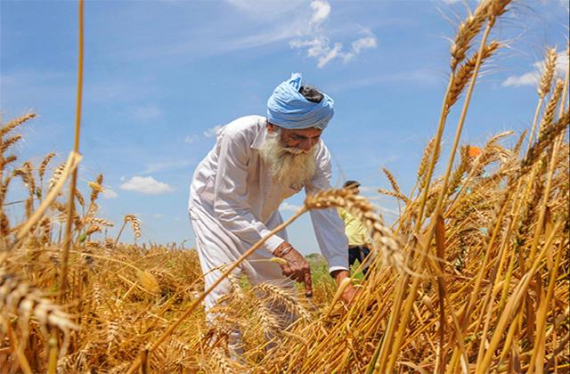 purchase of record 398 59 lakh tonnes of wheat worth rs 78 721