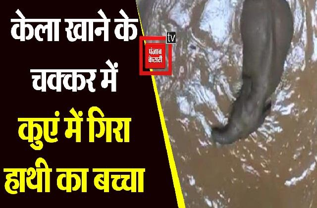 elephant falls in a well due to banana eating