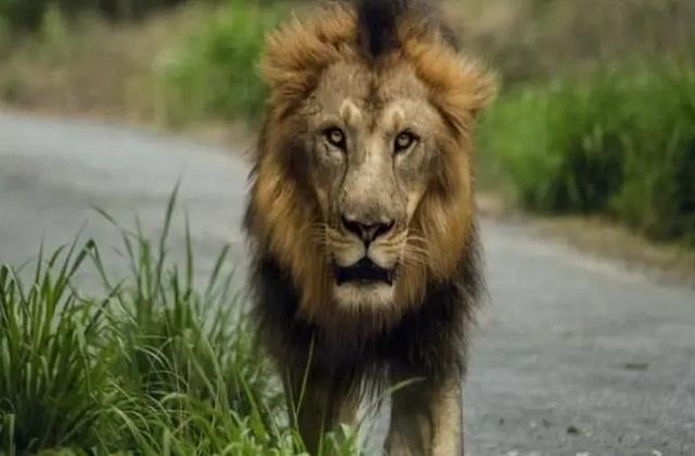 national news punjab kesari corona virus hyderabad lions