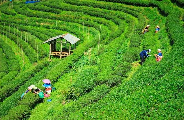 विश्व चाय दिवस: चाय के शौकीन लोगों को जरूर पसंद आएंगे भारत के ये 5 Tea Garden
