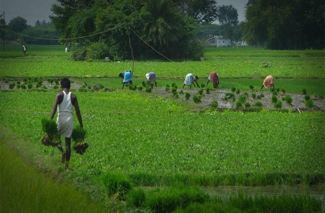 niti aayog said second wave of corona will not affect agriculture sector