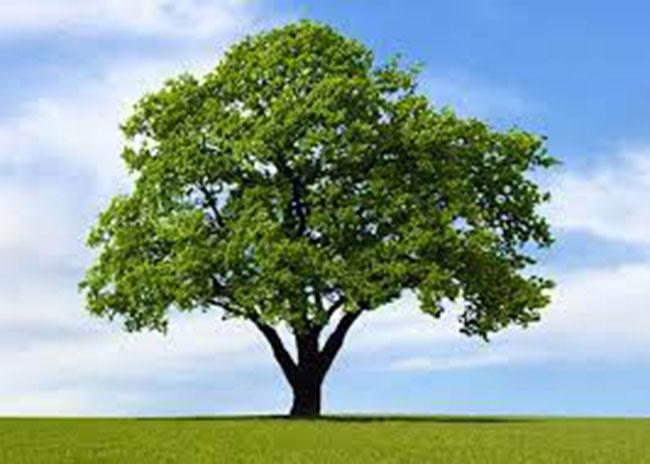 PunjabKesari World Environment Day