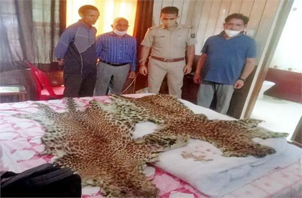 accused confessed crime know why the leopards were killed