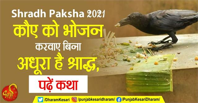 shraddha is incomplete without feeding the crow read the story