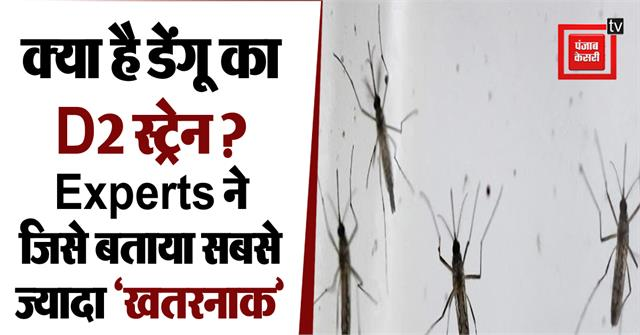 d2 strain found in the blood of dengue fever victims in