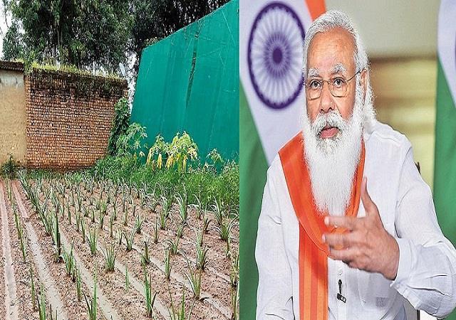 pm modi praised aloe vera village in jharkhand in his mann ki baat program