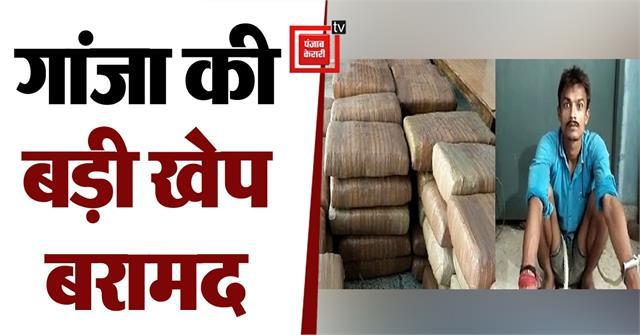 ganja worth one crore 67 lakhs recovered in lakhisarai