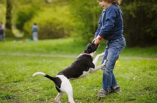 World Rabies Day: कुत्ता काट लें तो तुरंत अपनाएं ये घरेलू उपाय