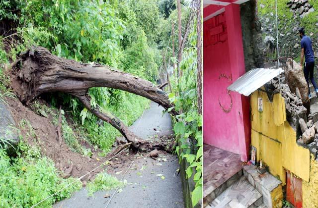 PunjabKesari, Tree and Landslide Image