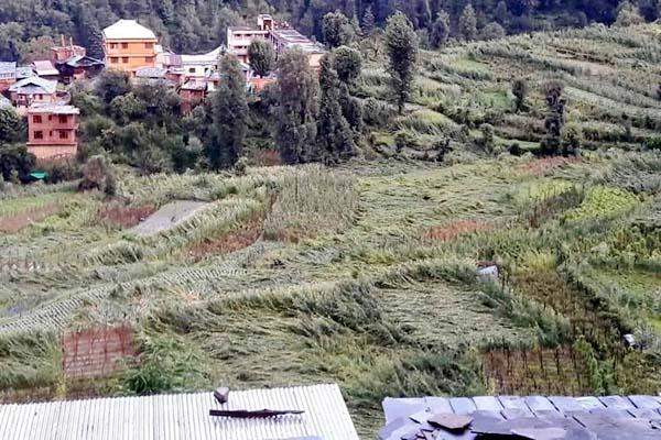 PunjabKesari, Crop Image