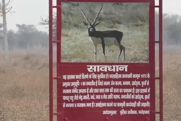 PunjabKesari, black deer