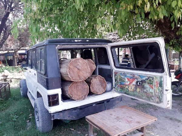 PunjabKesari, Wood Logs Image