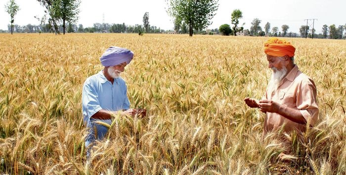 केन्द्र राज्यों की मदद से किसान डेटाबेस को 5.5 करोड़ से बढ़ाकर 8 करोड़ करेगा: तोमर - center to increase farmer database from 5 5 crore to 8 crore tomar-mobile