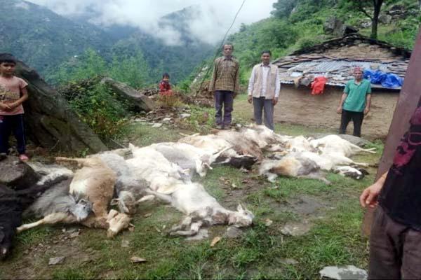 PunjabKesari, Dead Goat Image